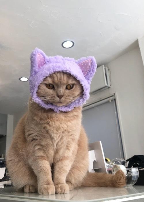 今日は猫の日。_c0108595_23505901.jpeg