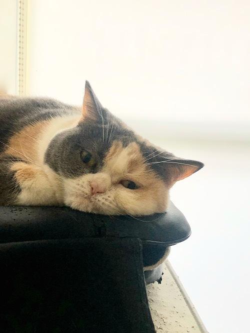 今日は猫の日。_c0108595_23592465.jpeg