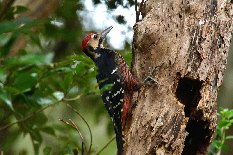 奄美大島:与路島の野鳥の鳥撮りへ。。。_e0362696_17041574.jpg