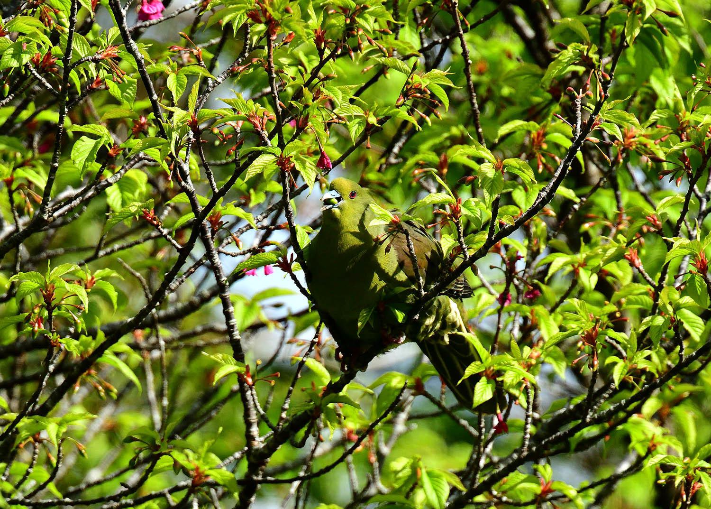 奄美大島:与路島の野鳥の鳥撮りへ。。。_e0362696_17041868.jpg