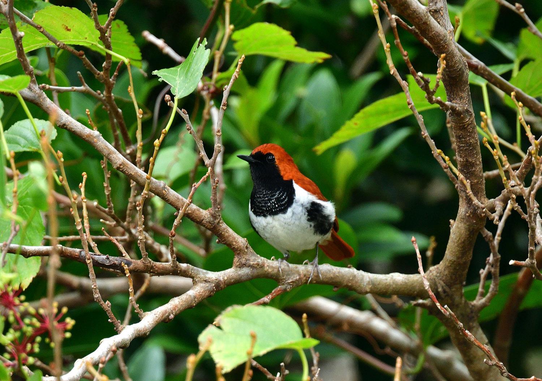 奄美大島:与路島の野鳥の鳥撮りへ。。。_e0362696_17044908.jpg