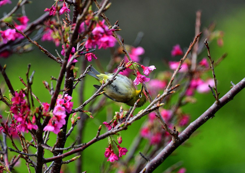 奄美大島:与路島の野鳥の鳥撮りへ。。。_e0362696_17045257.jpg
