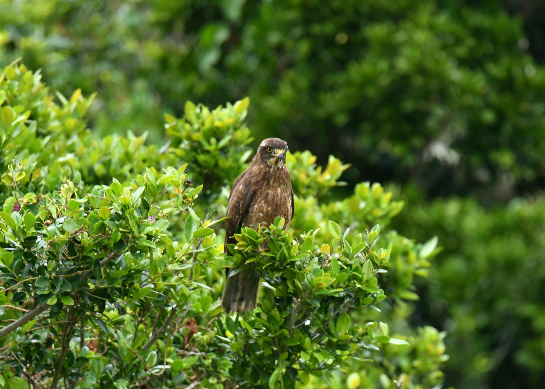 奄美大島:与路島の野鳥の鳥撮りへ。。。_e0362696_17052501.jpg