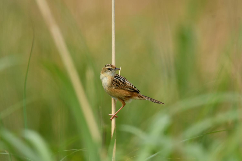奄美大島:与路島の野鳥の鳥撮りへ。。。_e0362696_17061351.jpg