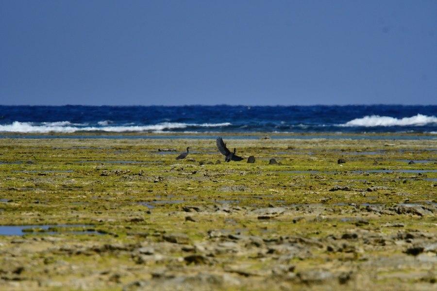 奄美大島:与路島の野鳥の鳥撮りへ。。。_e0362696_17062400.jpg