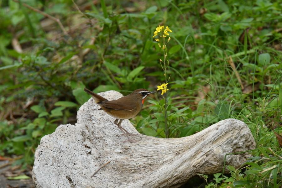 奄美大島:与路島の野鳥の鳥撮りへ。。。_e0362696_17321197.jpg