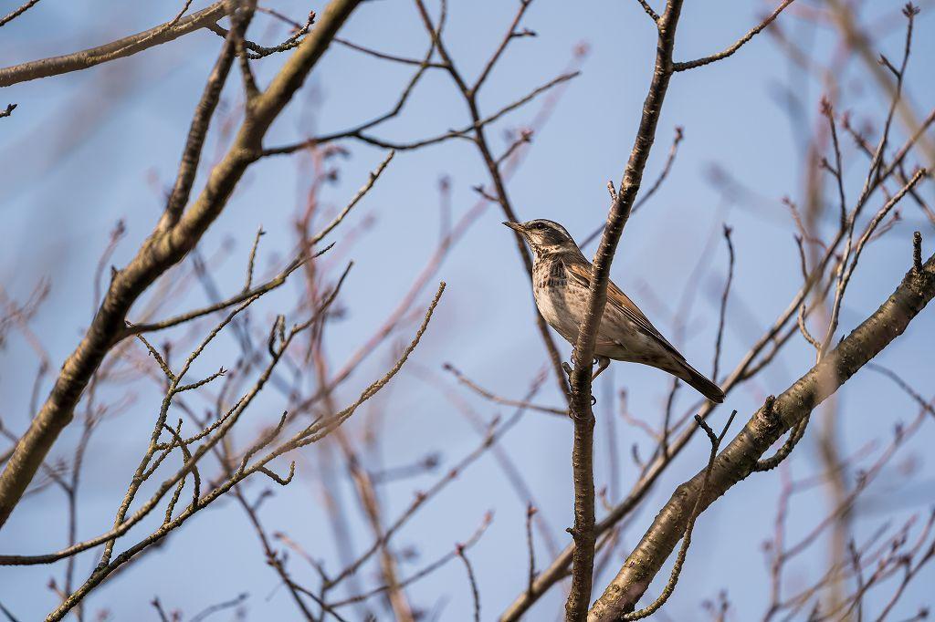 何かの鳥_e0362896_19082272.jpg
