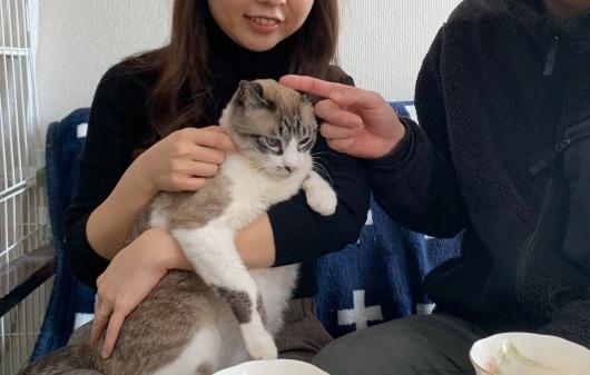 【里親決定の猫】ふくちゃん、決定。_a0170297_18221087.jpeg