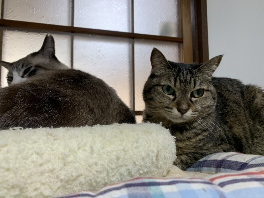【里親決定の猫】ふくちゃん、決定。_a0170297_18232903.jpeg