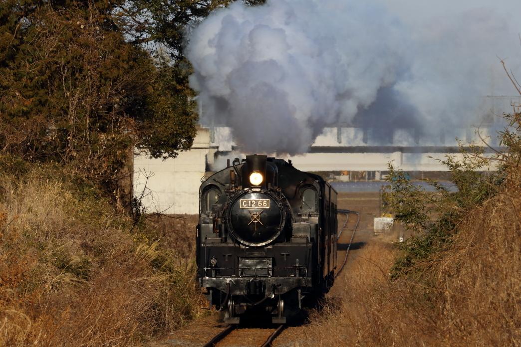 真っ正面から夕日を浴びる機関車 - 2020年・真岡鉄道 -_b0190710_21522551.jpg