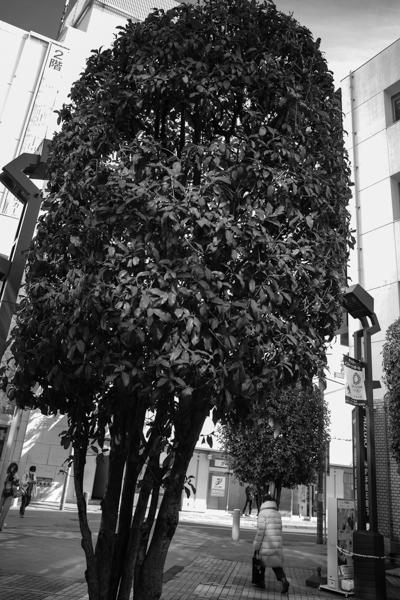 2020.02.23 Tree_a0390712_20442806.jpg