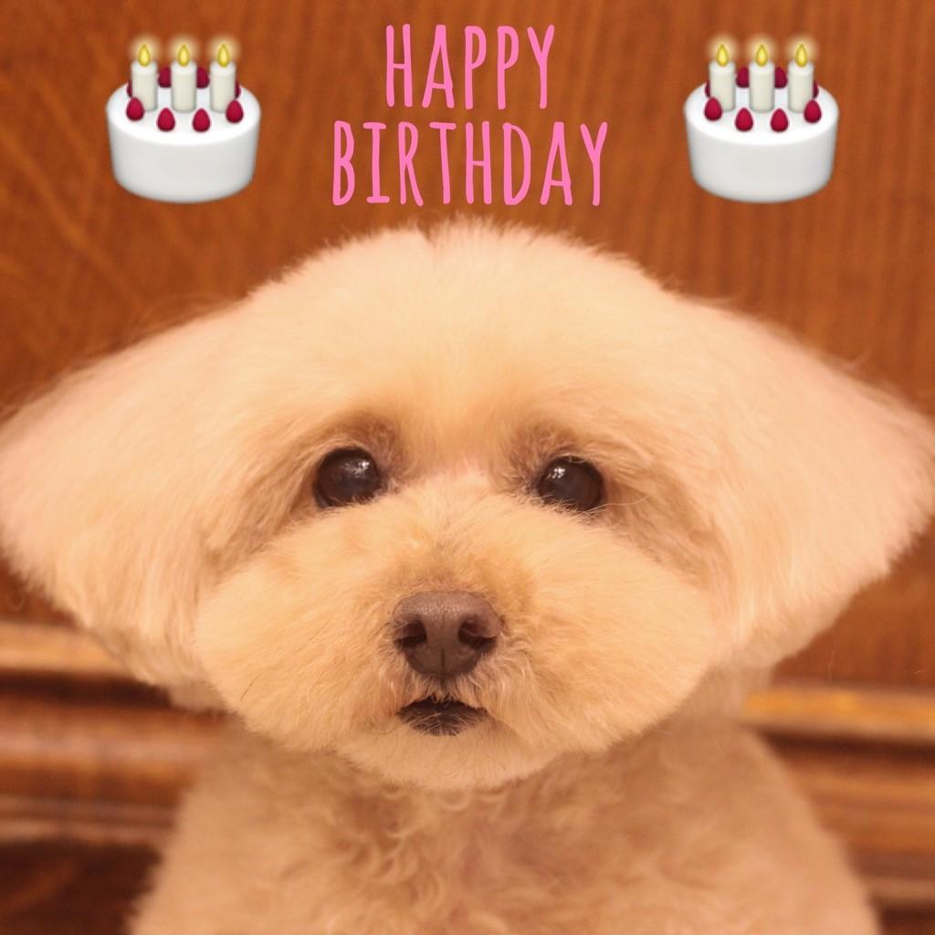 ☆ Happy Birthday ・ ロコちゃん ☆_d0060413_16342390.jpg
