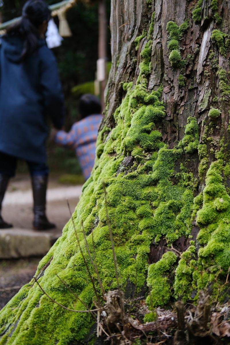 松江市  再訪、神魂(かもす)神社_b0061717_03001837.jpg