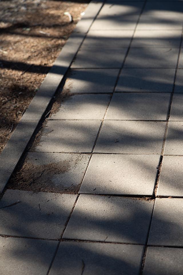 東独逸レンズで歩く井の頭公園 その2(PANCOLAR auto  1.8/80MC)_b0058021_10403136.jpg
