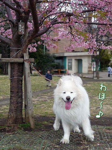 今日の小桜ちゃん_c0062832_14345063.jpg