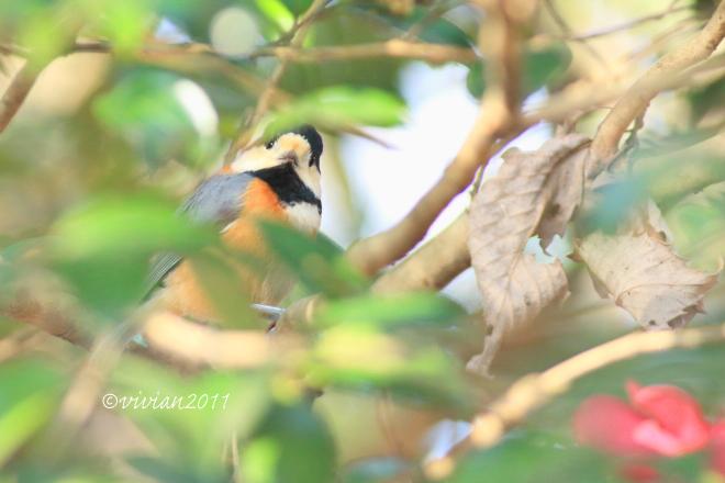 野鳥を観察する会 2回目 in 真岡井頭公園_e0227942_21241733.jpg
