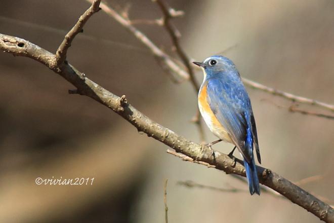 野鳥を観察する会 2回目 in 真岡井頭公園_e0227942_21325118.jpg
