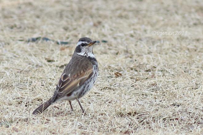野鳥を観察する会 2回目 in 真岡井頭公園_e0227942_21355362.jpg