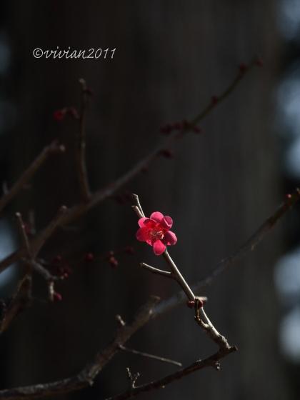 野鳥を観察する会 2回目 in 真岡井頭公園_e0227942_21374224.jpg