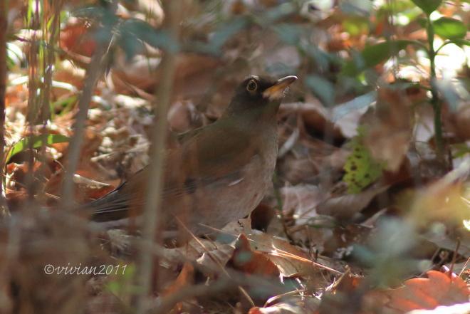野鳥を観察する会 2回目 in 真岡井頭公園_e0227942_21392436.jpg