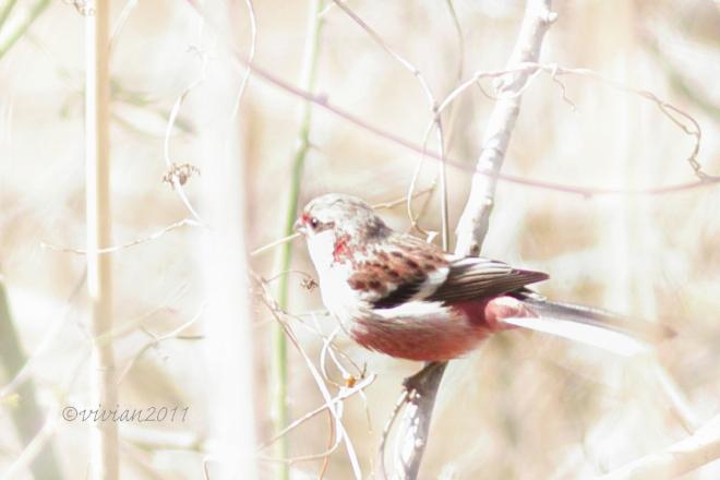 野鳥を観察する会 2回目 in 真岡井頭公園_e0227942_21401328.jpg