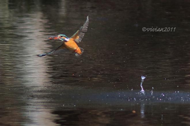 野鳥を観察する会 2回目 in 真岡井頭公園_e0227942_21420902.jpg