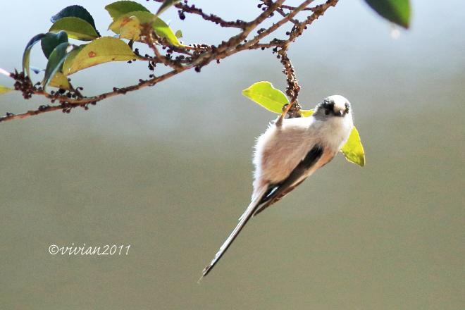 野鳥を観察する会 2回目 in 真岡井頭公園_e0227942_21433691.jpg