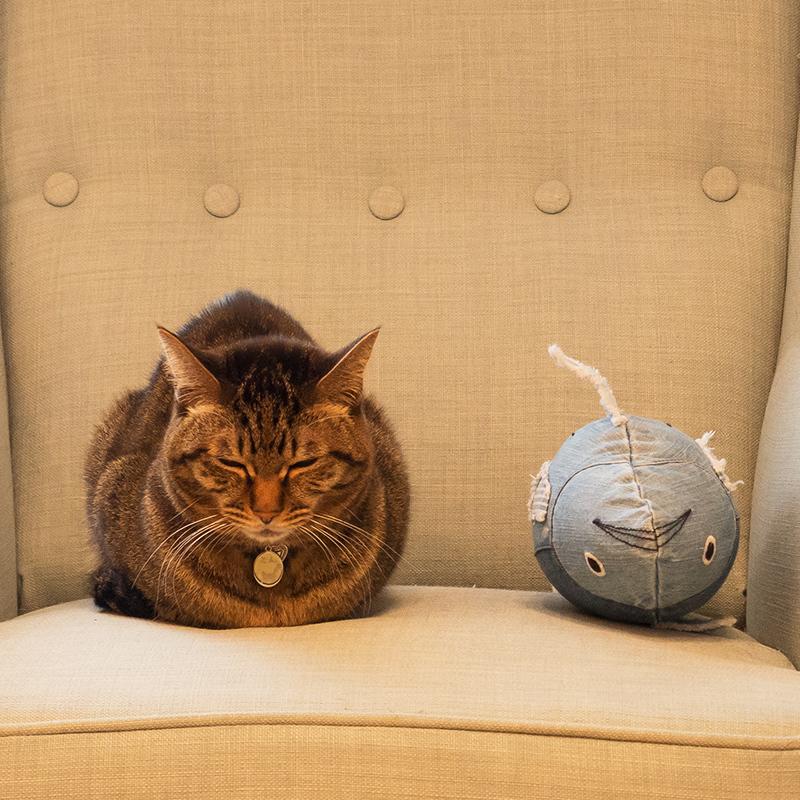 猫とカツオ_a0003650_08004255.jpg