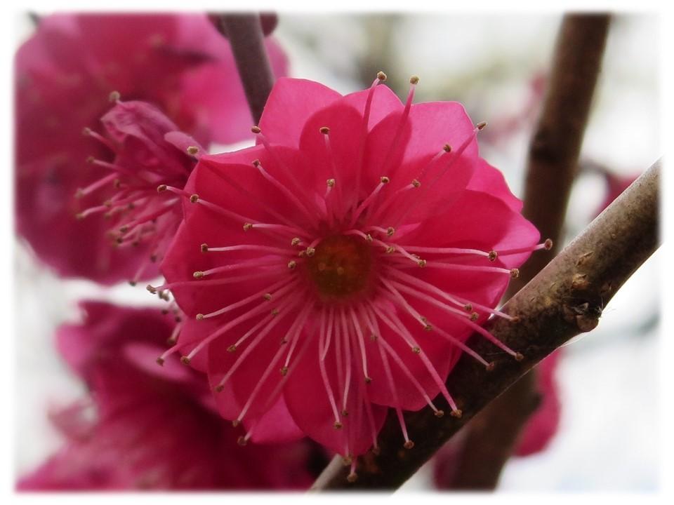 街が少し春めいてきましたね。_c0185858_14384241.jpg