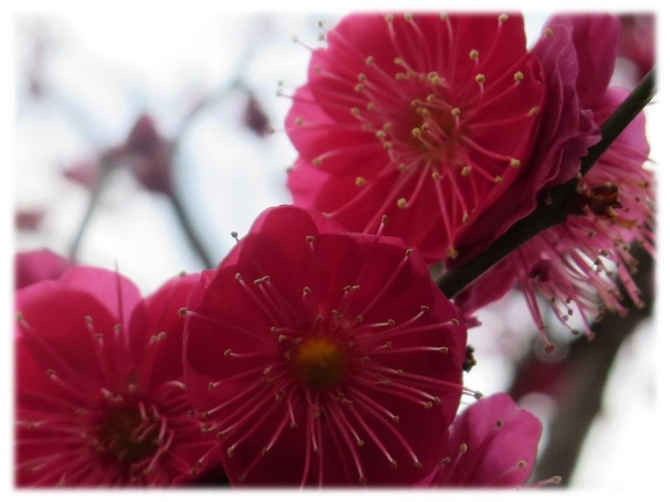 街が少し春めいてきましたね。_c0185858_14384674.jpg