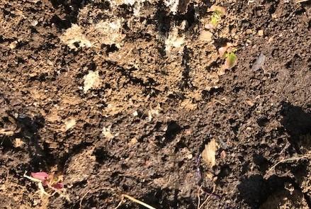 不思議、昨年種を蒔いたサニーレタス発芽2・21_c0014967_07125950.jpg