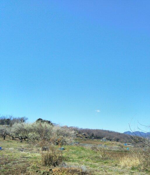 空はこんなに青いのに_d0345667_20051293.jpg