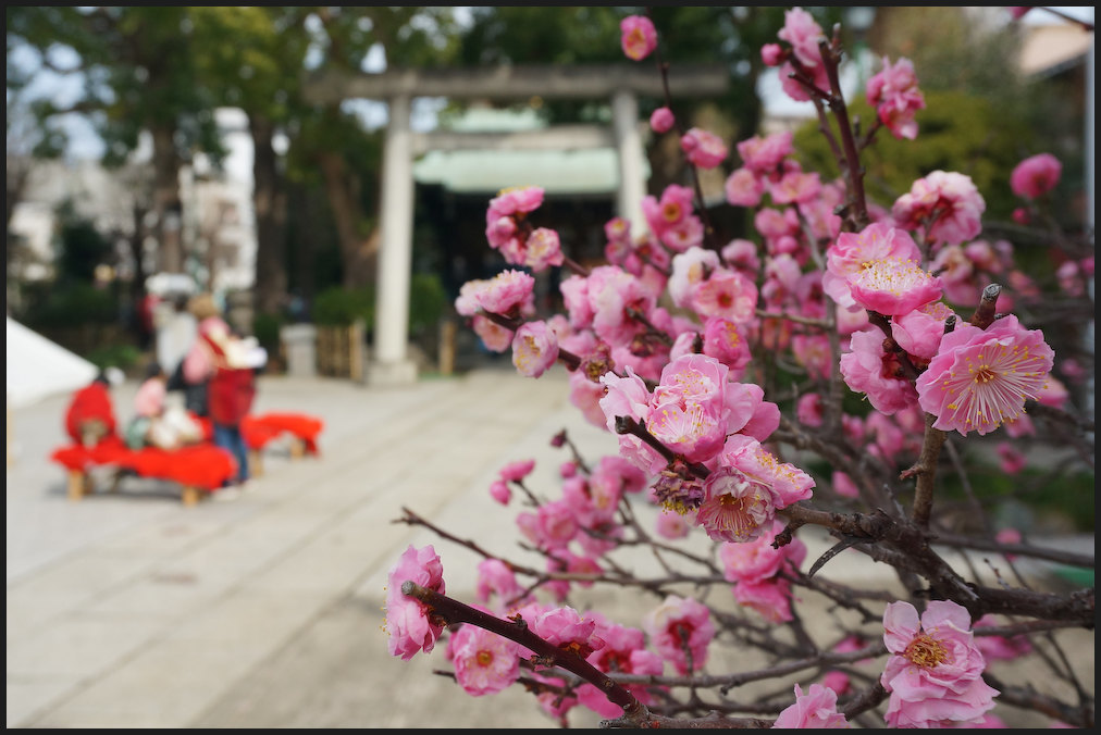 小村井 香取神社・香梅園_b0340572_10475012.jpg