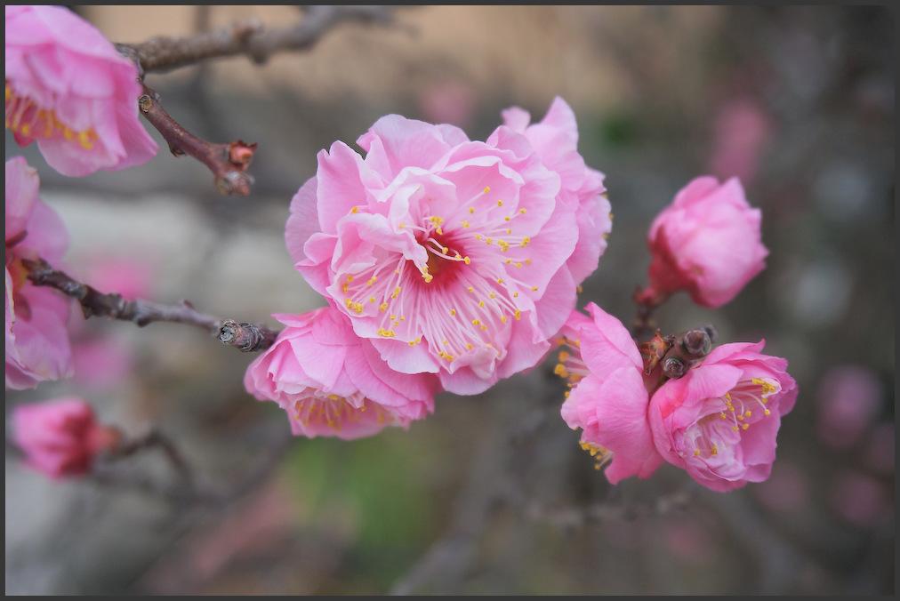 小村井 香取神社・香梅園_b0340572_10475304.jpg