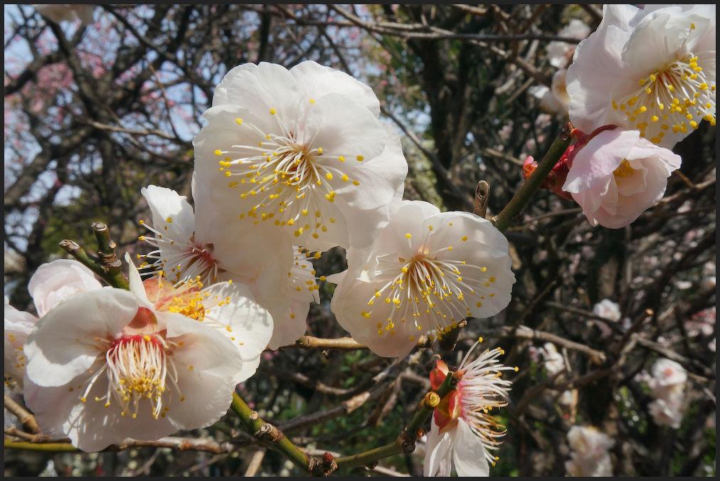 小村井 香取神社・香梅園_b0340572_10475766.jpg