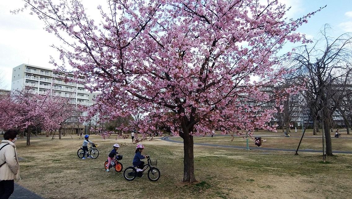 ふじみ野市・福岡中央公園の今_a0107574_18120660.jpg