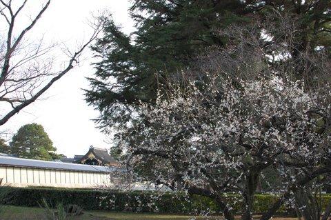 2020.02.20リハビリ京さんぽ~京都御苑_e0410498_17231419.jpg