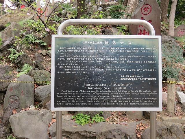 駒込富士神社②「一富士、二鷹、三茄子」(新江戸百景めぐり60-2)_c0187004_14294369.jpg