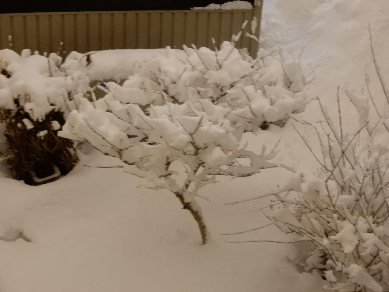 今朝までに降った雪はとけたのものの、夜になってからその倍の雪が積もりました_c0025115_23190096.jpg