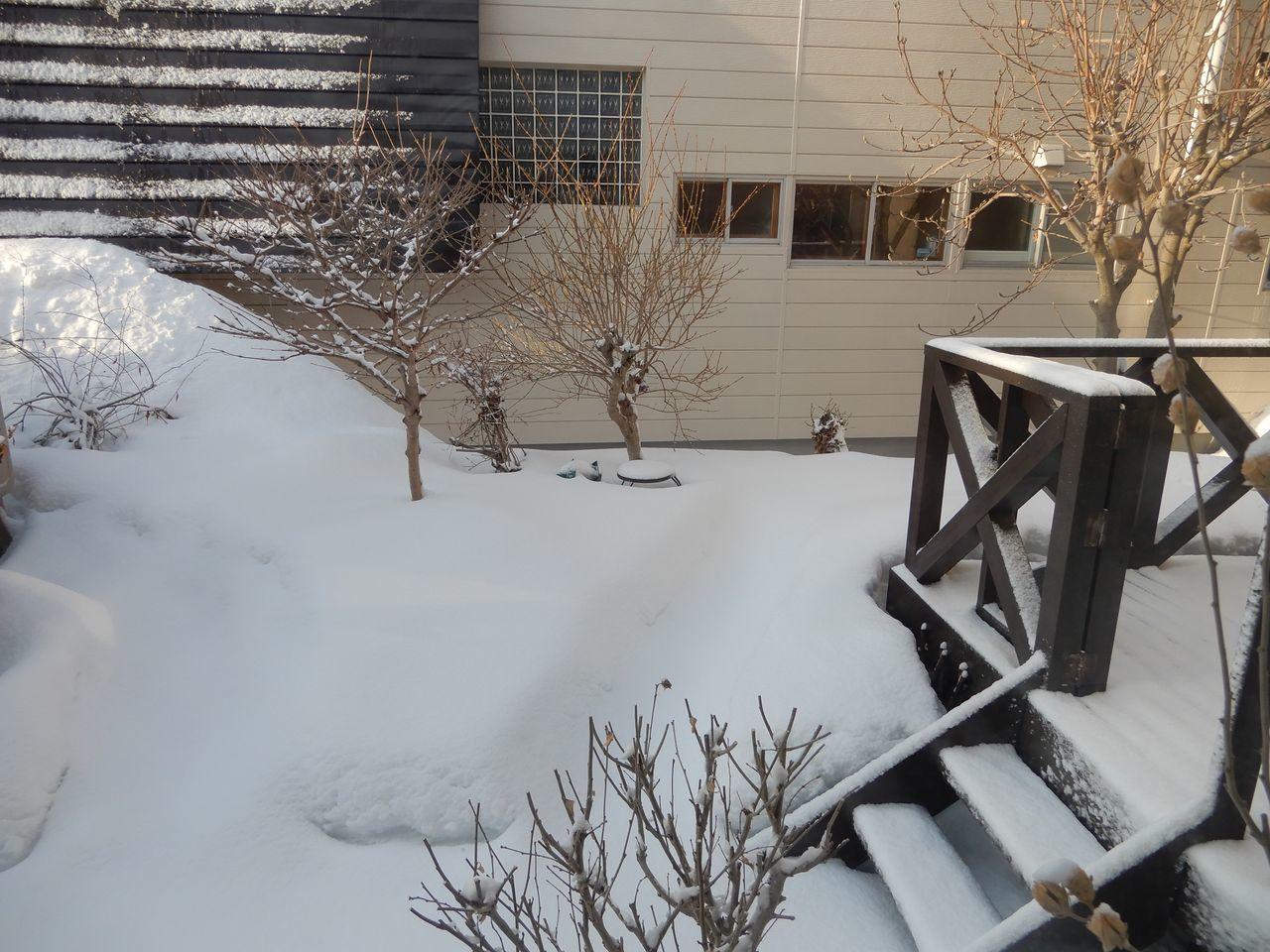 今朝までに降った雪はとけたのものの、夜になってからその倍の雪が積もりました_c0025115_23270412.jpg