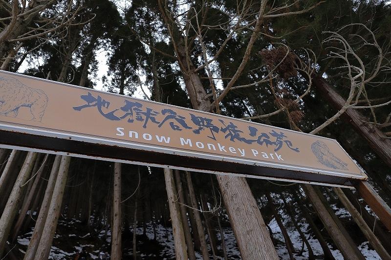 【地獄谷野猿公苑(1)】長野日帰り旅 - 1 -_f0348831_19422375.jpg