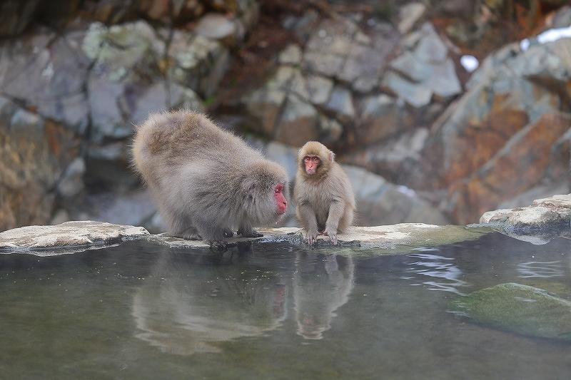 【地獄谷野猿公苑(1)】長野日帰り旅 - 1 -_f0348831_19422966.jpg