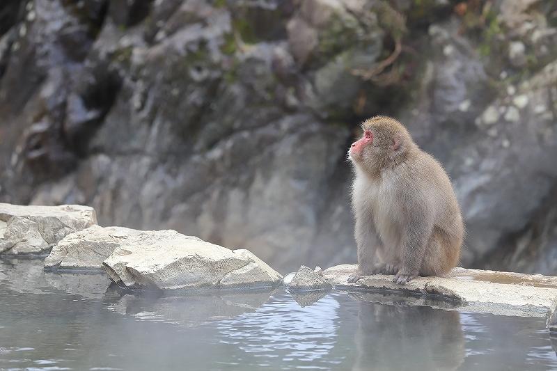 【地獄谷野猿公苑(1)】長野日帰り旅 - 1 -_f0348831_19424502.jpg
