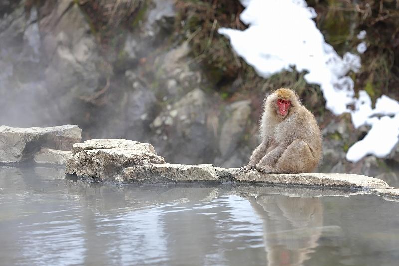 【地獄谷野猿公苑(1)】長野日帰り旅 - 1 -_f0348831_19425726.jpg