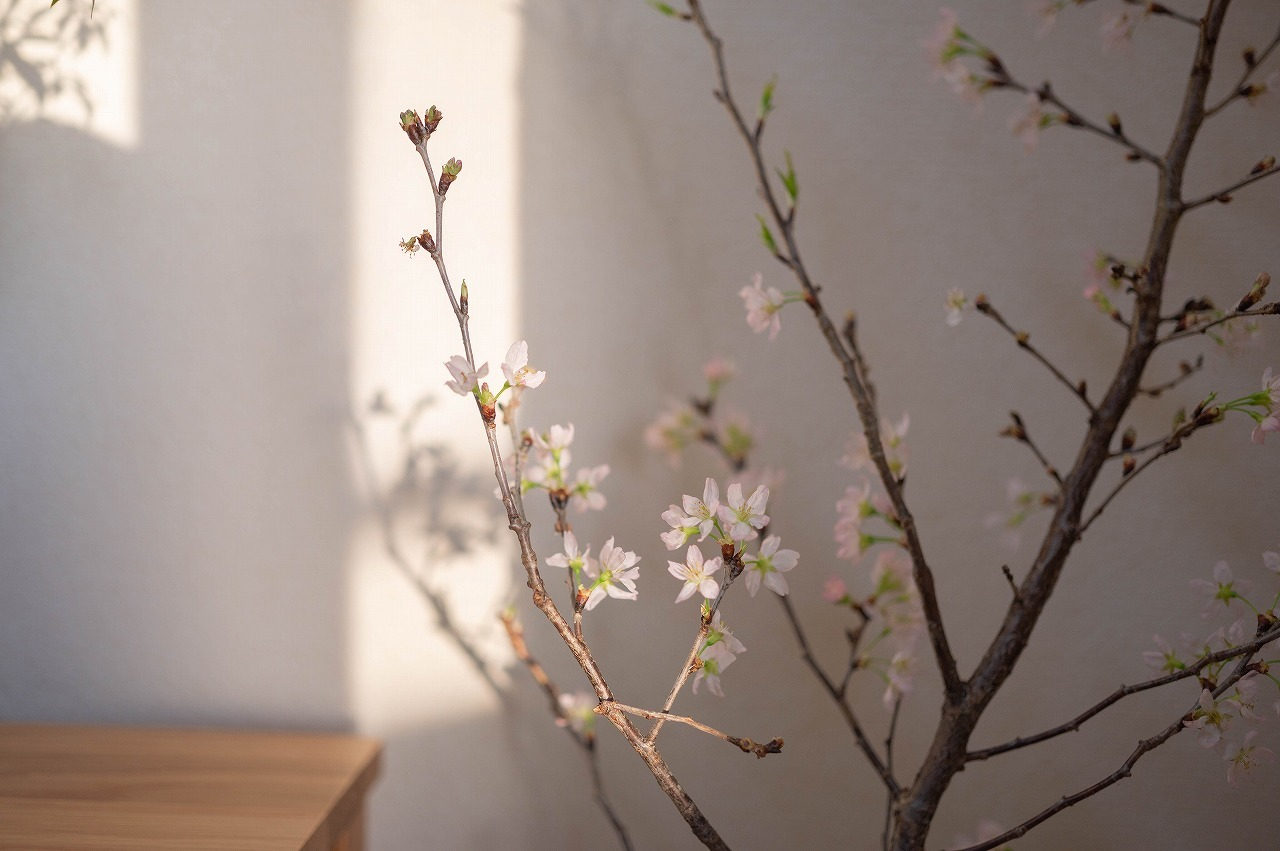 scene1637:啓翁桜_e0253132_22463103.jpg