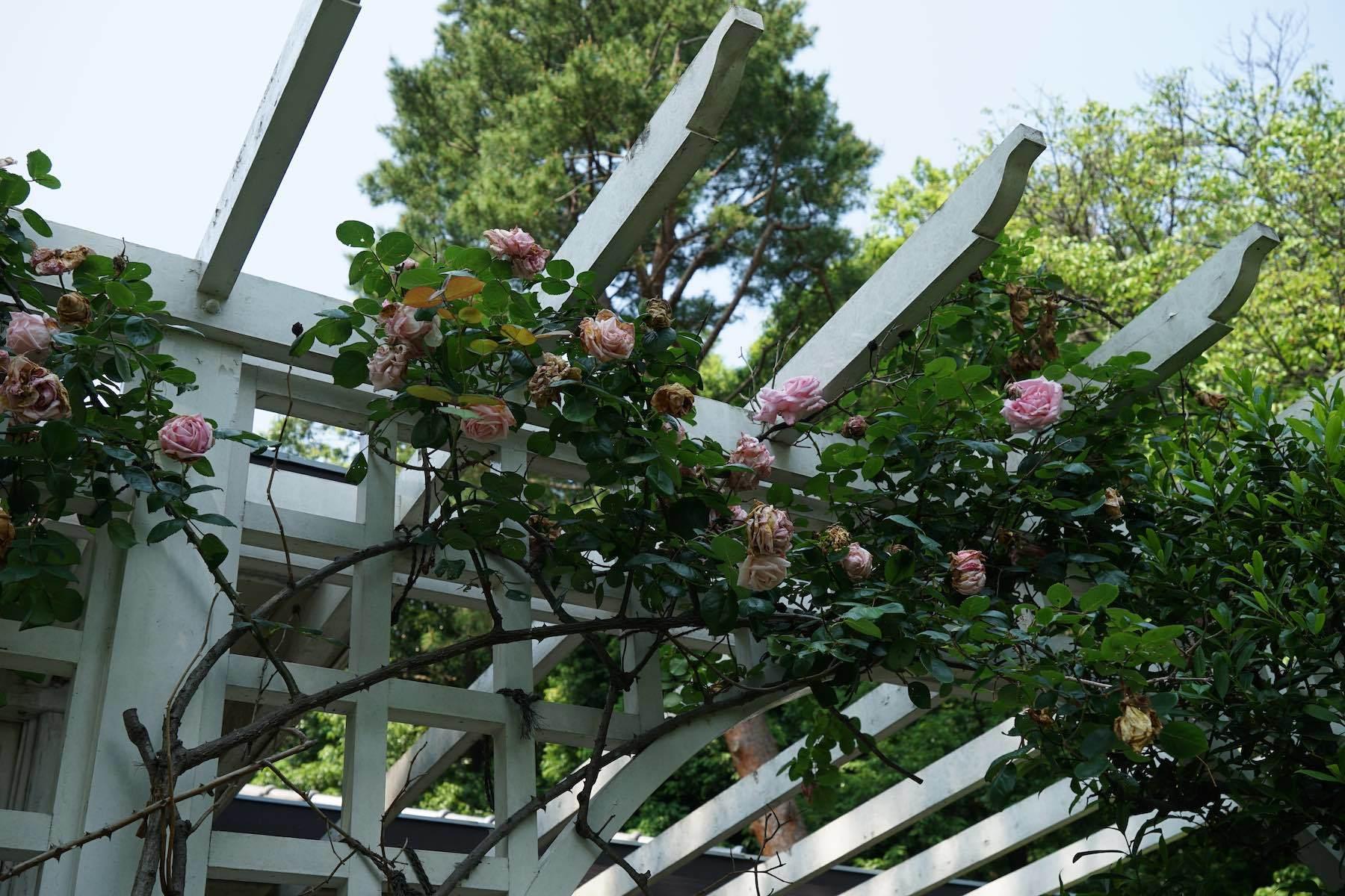 江戸東京たてもの園 30_b0360240_19165298.jpg