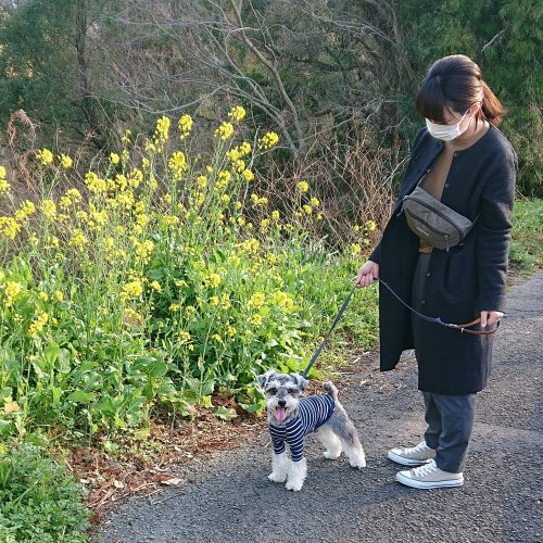 ライゼ君のお散歩_c0172049_23080402.jpg