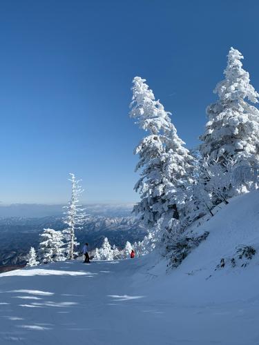 天元台スキー!_a0044162_16190593.jpg