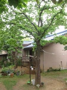 ハナミズキの家 ーHanamizuki Houseー_c0331470_20240358.jpg