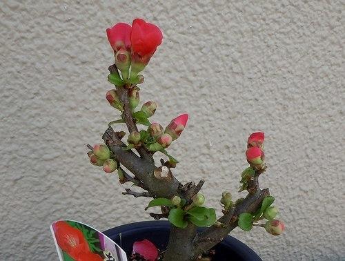 路傍の花、樹々の鳥(371) ~ 梅ストリートで ~_b0102572_12590503.jpg